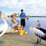 Fun with the  local Pelicans