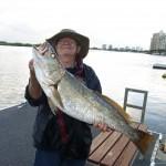 JEW FISH ON MAROOCHY RIVER